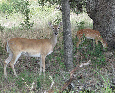 Aldermen hear residents' views on what to do with the deer