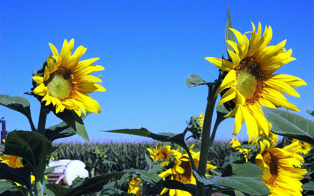 Alternative crops give growers good options